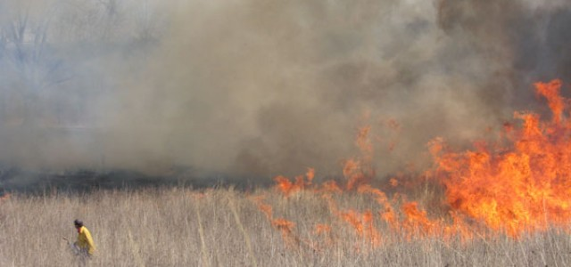 A controlled fire burns at Merry Lea