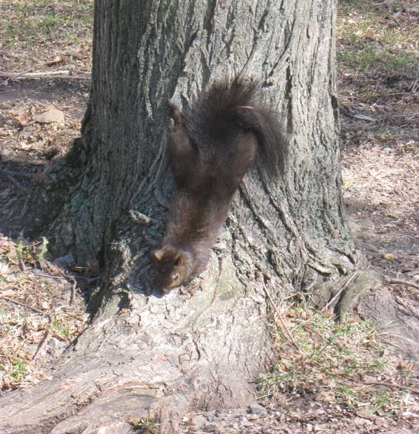 Squirrel on base of tree