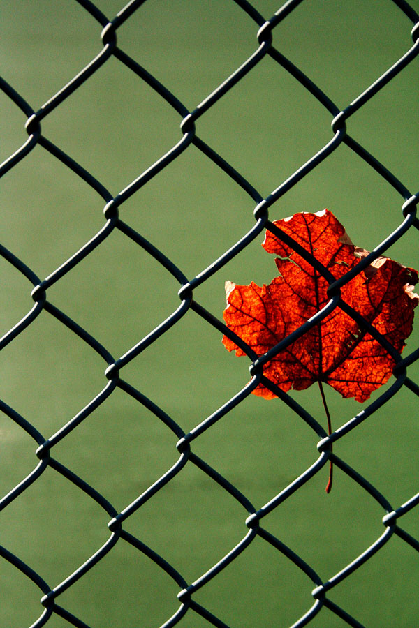Julia Baker's picture of a leaf caught in the wire around a tennis court