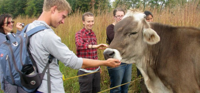 Grass-fed steer raised at Merry Lea