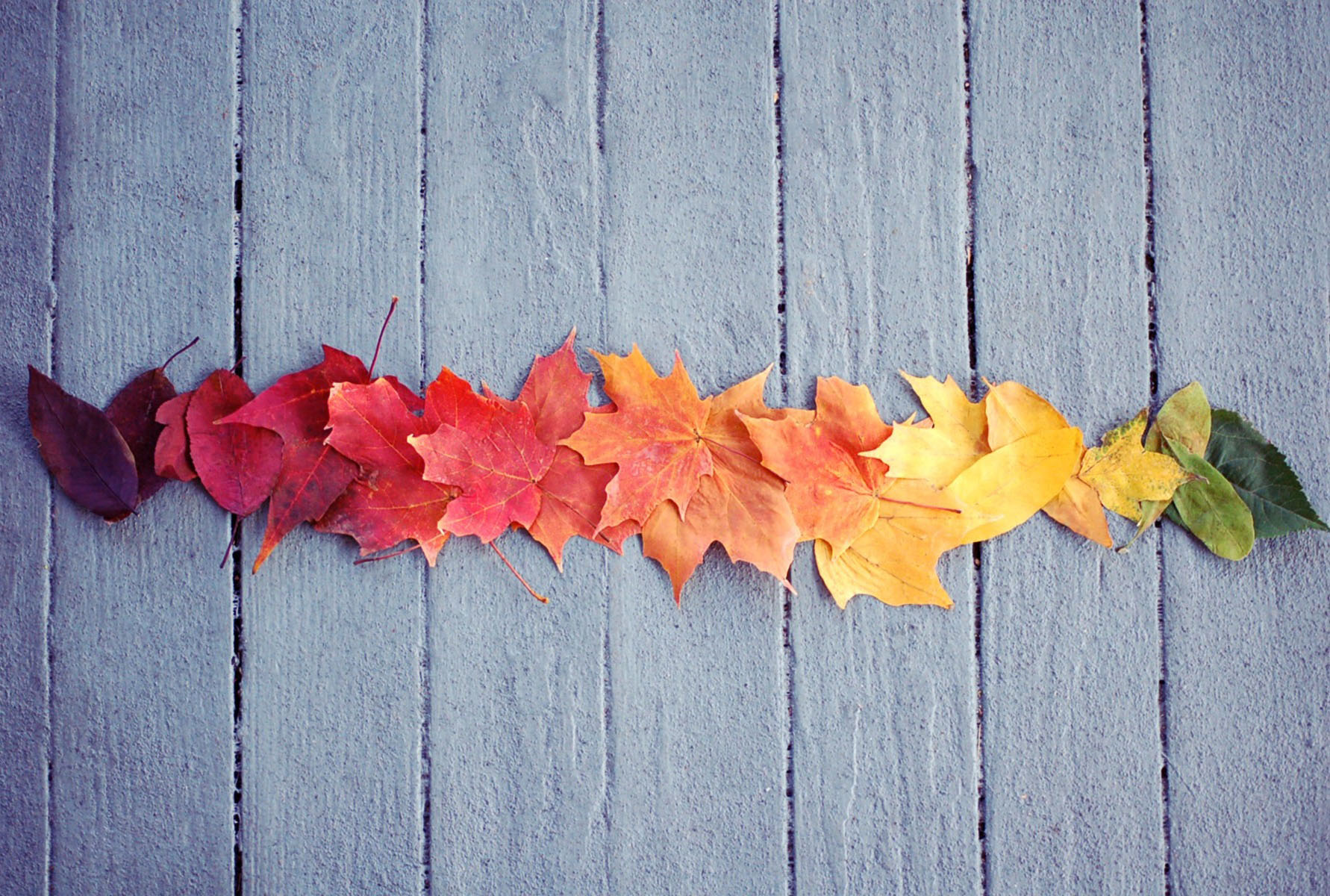Abbie Miller's photograph of multicolored leaves