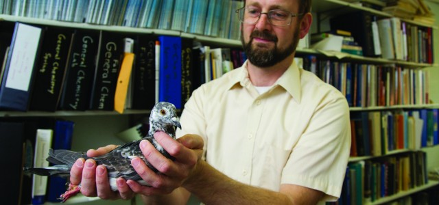 Birds make Smith a frequent flier