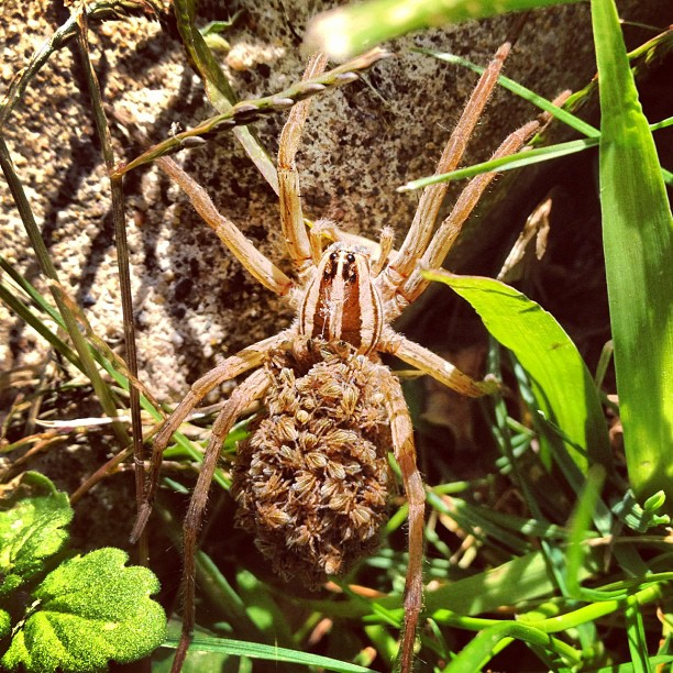 Alex Pletcher's closeup photo of a spider