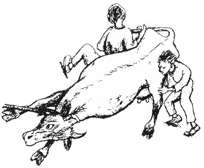 Drawing of a cow being dragged away by two people