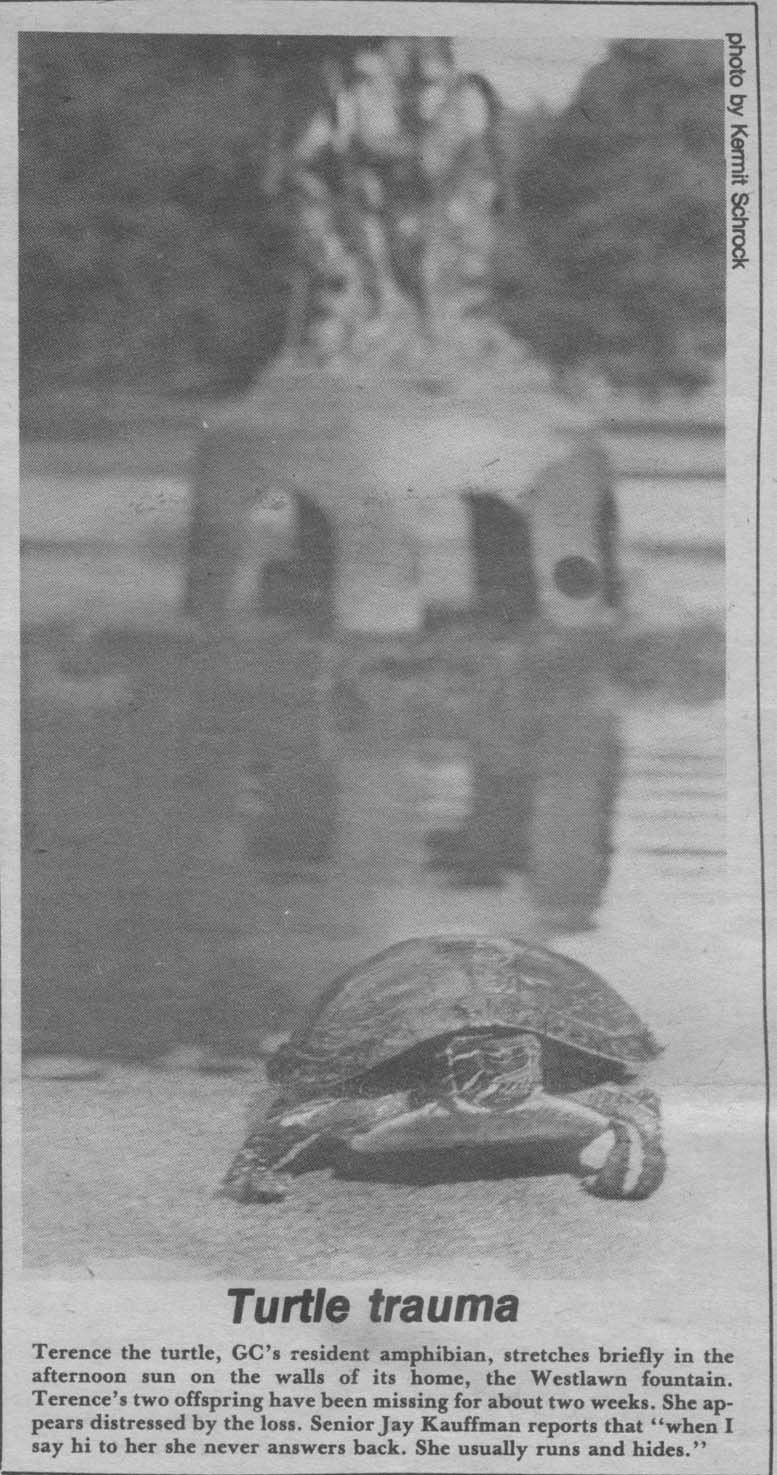"""Clipping from a 1986 copy of the Record; article is titled """"Turtle trauma"""""""