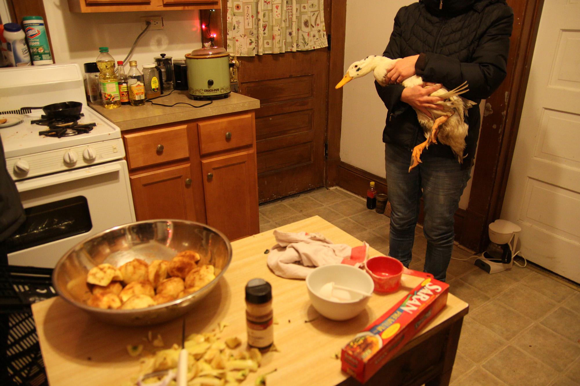 Duck in the kitchen