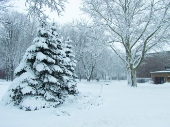 Snow covers evergreen trees along with the rest of campus after a storm.