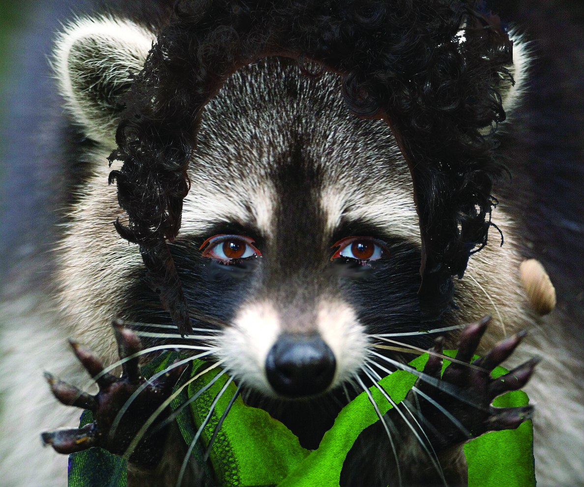 Photo of a racoon with human hair and clothing