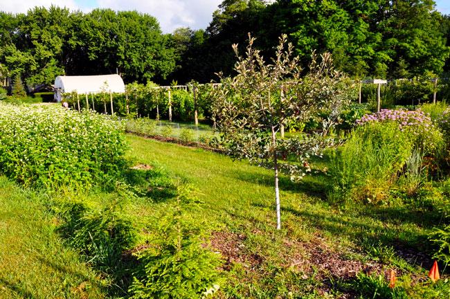 Gascho garden