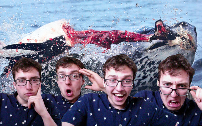 Selfies of Phil Longenecker photoshopped over a picture of a seal devouring a penguin