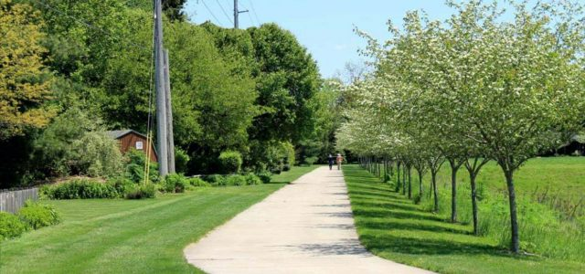 Recent graduate's work rooted in experience with trees
