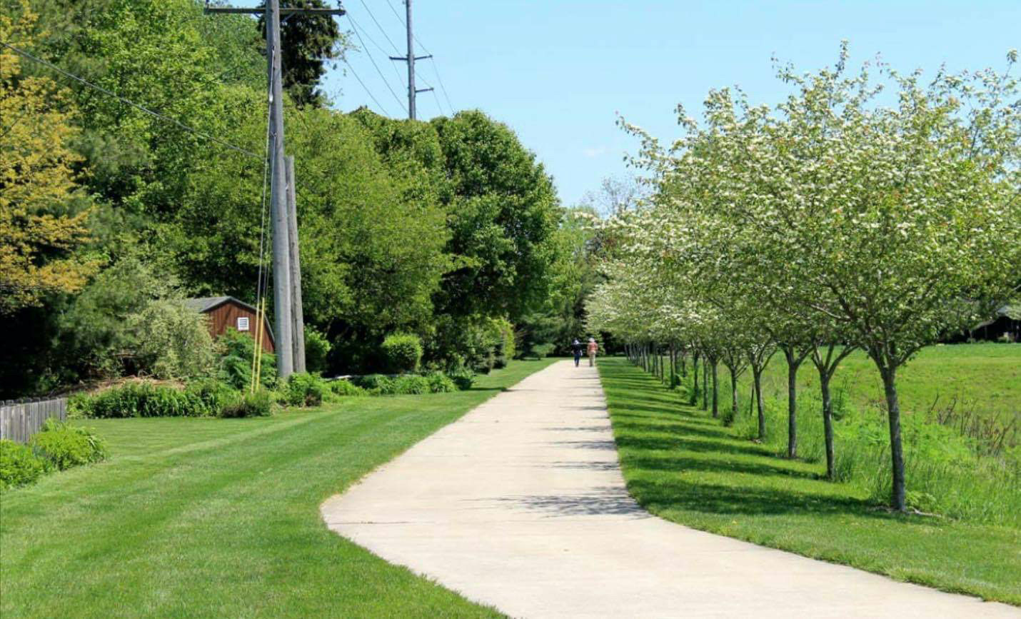 A pathway lined with rows of trees
