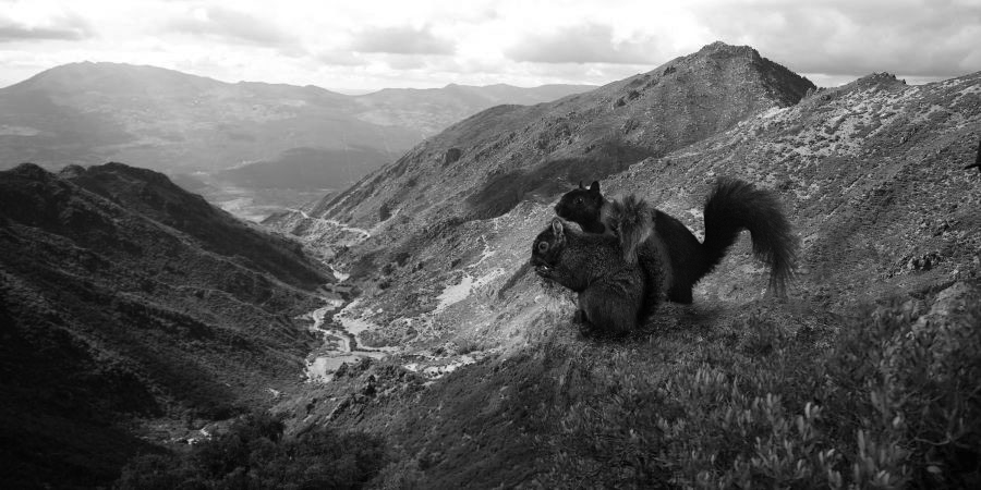 Two squirrels stand on a mountain ridge and overlook a canyon