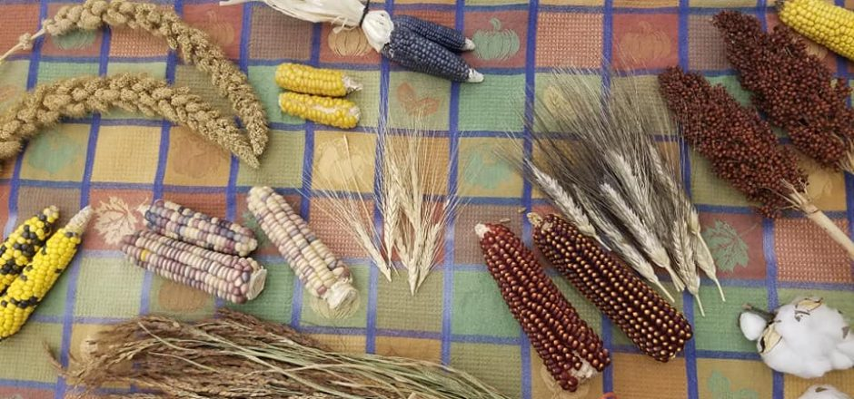 Saturday seed swap will offer seed access for growing gardening community