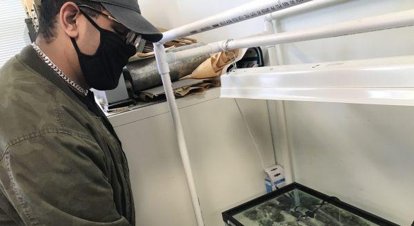 Davis feeds water creatures in his tank